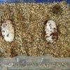 Jaja gekonów lamparcich
