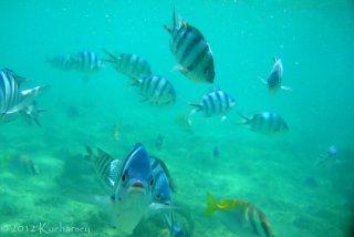 Ryby na rafie