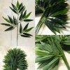 Gałązki Bambusa 2