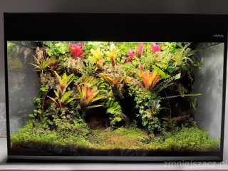 Wiwarium w Aquael Glossy 13,5 miesiąca dodane mchy