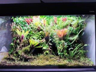 Wiwarium w Aquael glossy 18 miesiąc