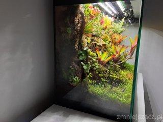 Wiwarium w Aquael Glossy 13,5 miesiąca dodane mchy 2