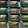 12 miesięcy wiwarium w aquael glossy