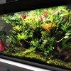 wiwarium W aquael glossy 21
