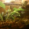 akwaterrarium kumaków