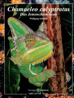 Załączony obraz: Chamaeleo calyptratus Das Jemenchamaleon.jpg