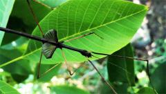 Załączony obraz: Screenshot_2020-02-28 Superinsect - hodowla owadów egzotycznych.png
