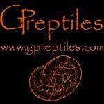 Python regius 2014 - Pinstripe x Lesser - ostatni post przez GPreptiles