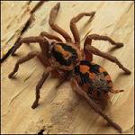 Świętochłowice - 30.04 oferta spidersonline.pl - dużo samic :) - ostatni post przez Morph