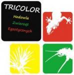 Sporo roślin tropikalnych dla gadów płazów pająków - ostatni post przez lemonix