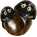 Nietypowe skorupiaki Rubber Ducky Isopods - ostatni post przez Pitu