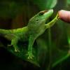 Wybór gatunku węża do terrarium o wymiarach 70x40x30 - ostatni post przez Blass
