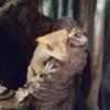 Klucie jajek w terrarium z samicą  / gekony orzęsione - ostatni post przez zandi