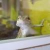 Agama Brodata - ile owadów... - ostatnich postów przez Janda