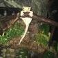 Jaka jaszczurka do terrarium? - ostatni post przez Jakub14