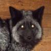 Fretka jako zwierze domowe - ostatni post przez Saphira123
