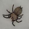 Co to za pająk? - ostatnich postów przez natan