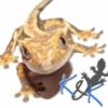 """Młode z 2019 - KKGecko - Gekony Orzęsione (Correlophus """"Rhacodactylus"""" Ciliatus) Na Sprzedaż / Karma Repashy 3.2 - ostatni post przez QQxQ"""