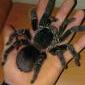 Płeć pająka - ostatni post przez wlazio121