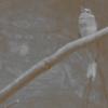 kupię Hemidactylus imbricatus - last post by Aveshu
